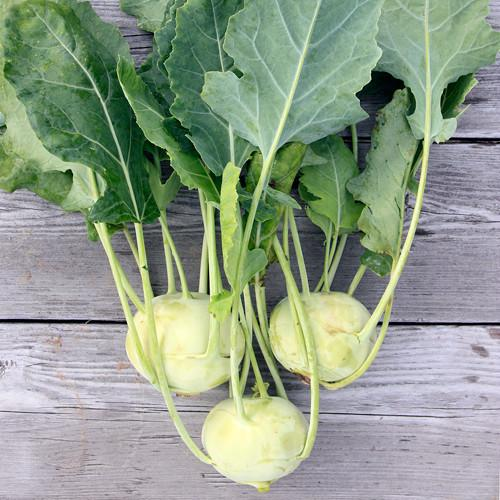 Kohlrabi The Weirdest Looking Vegetable The Land Connection