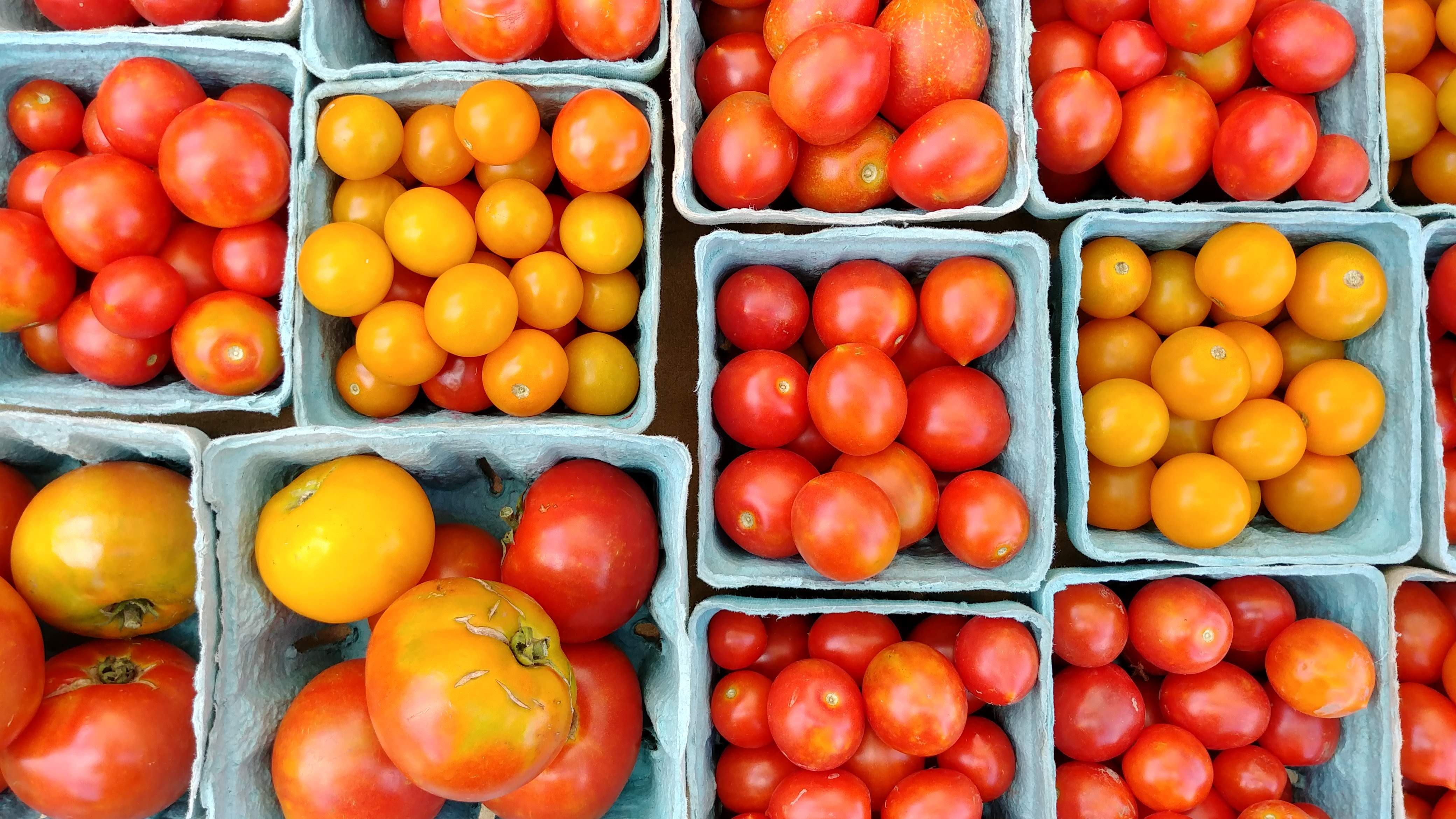 I M Adam And These Are My Tomatoes The Land Connection